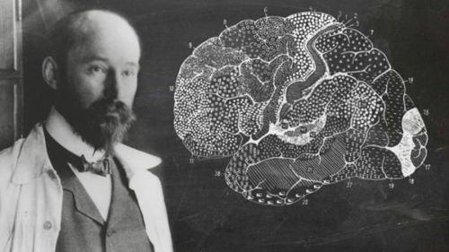Brodmann, áreas corticales