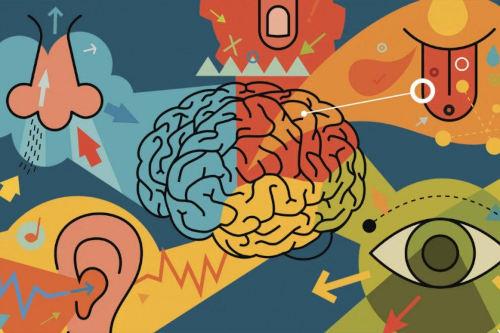 Sistema sensorial cerebro