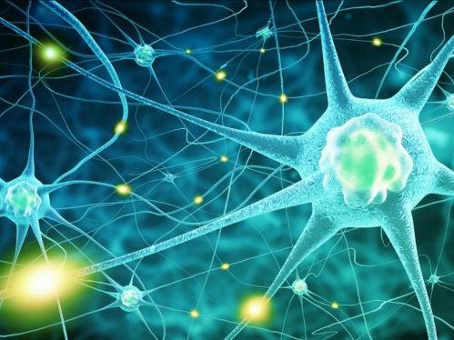 Función de las neuronas