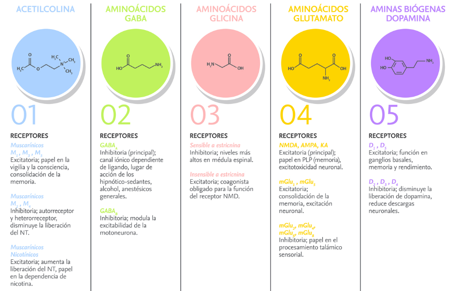 Función de los neurotransmisores