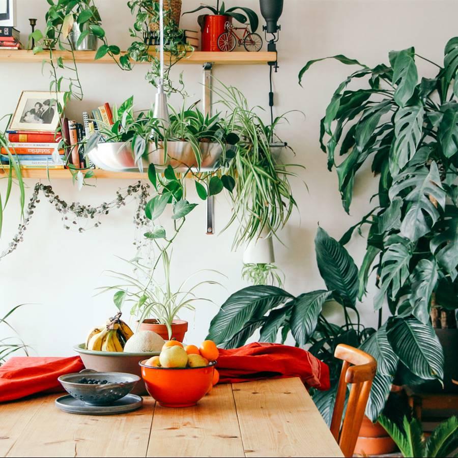 Plantas que purifican el aire del hogar